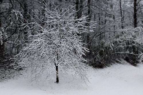 snow tree nature virginia va 365 roanokeva 2013 011713