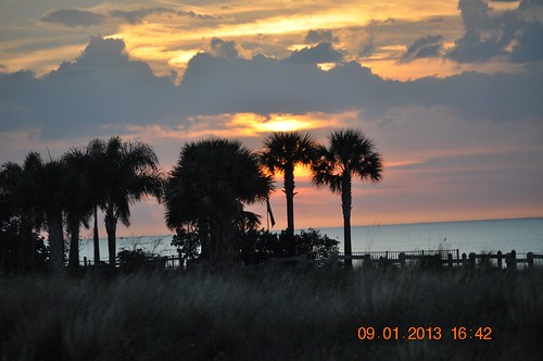 flowers sunset fish beach water birds silhouette butterfly manatee electricity crabs powerplant viewing apollobeach mantee viewingcenter bendpowerstation tampaeectric