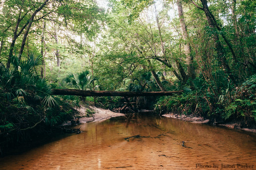 vsco vscofilm hogtowngreenway hogtowncreek florida landscape gainesville naturalbeauty scenic wild colorful color tropical jungle forest woods longexposure water creek stream brook river