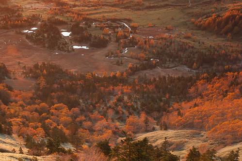 autumn tree fall japan sunrise 2012 shibutouge