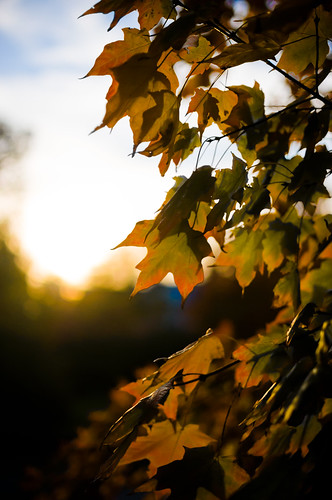 sunset usa sun fall leaves sunshine indiana bloomington indianauniversity 2012 in