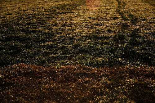 northshorepark spring texas texture