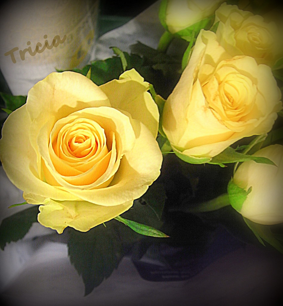 Yellow Rose Means Friendship So Happy Monday Morning Flickr