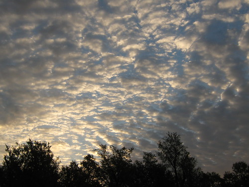 trees sky clouds sunrise landscapes mothernature fortriley