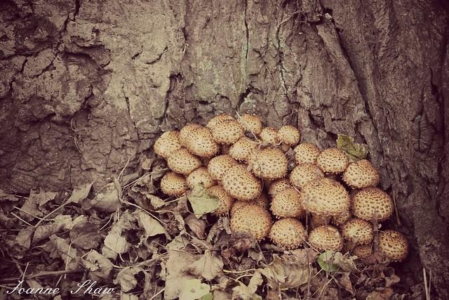 IMG_4365 toadstools DEN