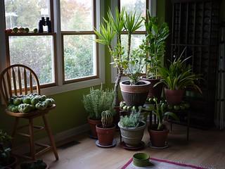 Houseplants   by F. D. Richards