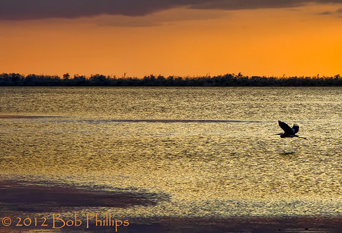 sunset gulfofmexico clouds florida greatblueheron pineland