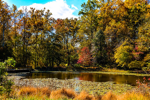 Walney Pond in Lawrence Park Fairfax County VA | by mbell1975