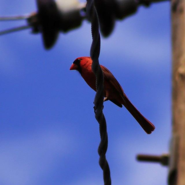 Birds and their love for wires