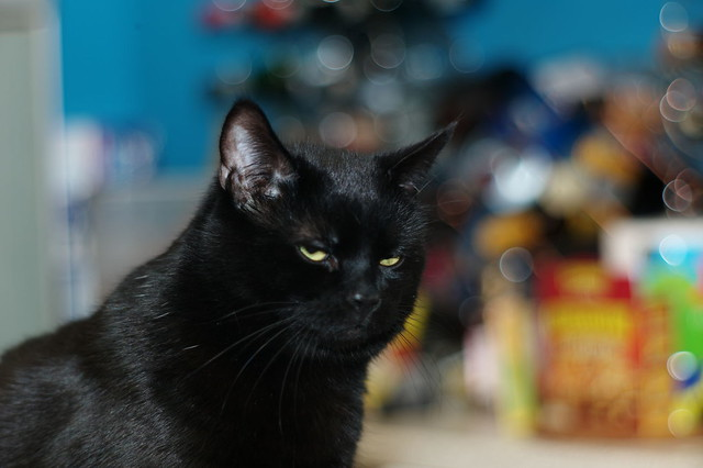 Bruce thinks the bokeh is a bit busy...
