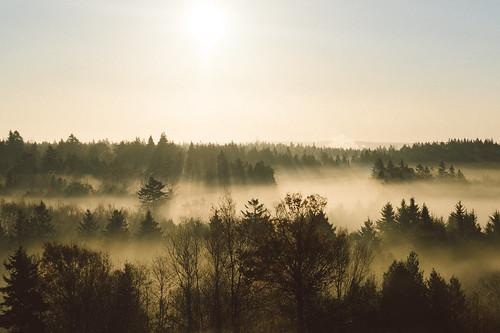 morning autumn mist fall fog sunrise dawn newbrunswick saintjohn rockwood