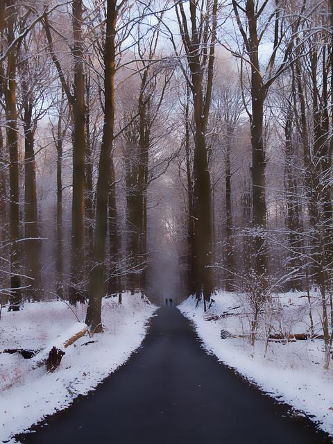 Promenons-nous dans le bois ...