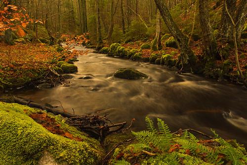 trees plants water leaves creek river flow moss stream sweden stones bushes halland mygearandme