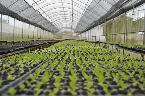 costales farms   by PinoyOrganics