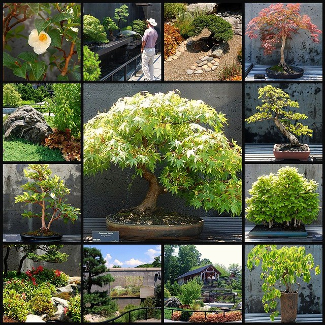 The Bonsai Garden at The North Carolina State Arboretum, Asheville