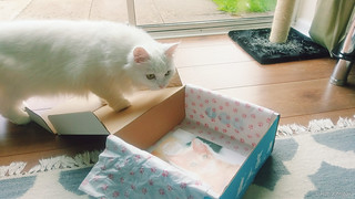 Purrfect Box - August | by intoruth