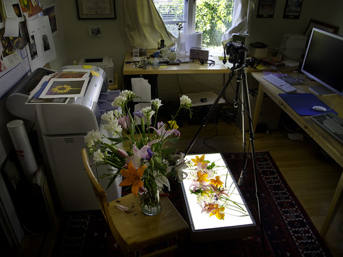 Lightbox and Flowers | by Harold Davis