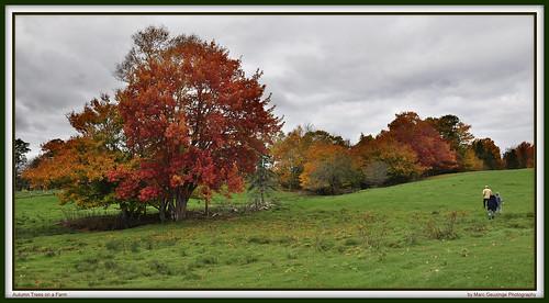 autumn red sky orange canada green colors yellow colorful novascotia cloudy farm dramatic can maritimes atlanticcanada middleton nikonphotography marcgeuzingephotography