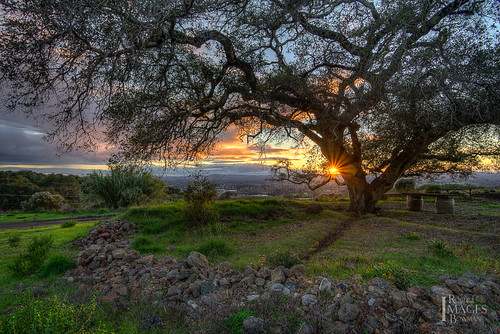 california trees light sunset sky sun color tree grass clouds bench oak nikon rocks branches horizon trench flare sonomacounty rays santarosa rockwall barrells paradiseridge bobbowman rmbimages robertbowmanphotography