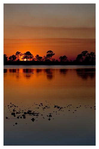 trees sunset beautiful nikon dslr allshots streamzoo