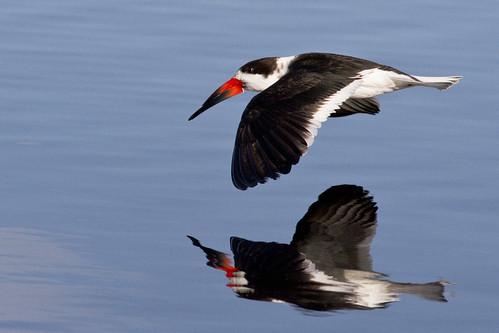 kh0831 florida bird aquaticbird 110 xplr thousandplus