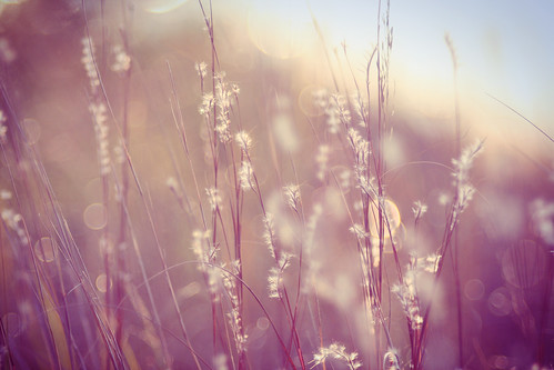Grass and bokeh | by moonstream
