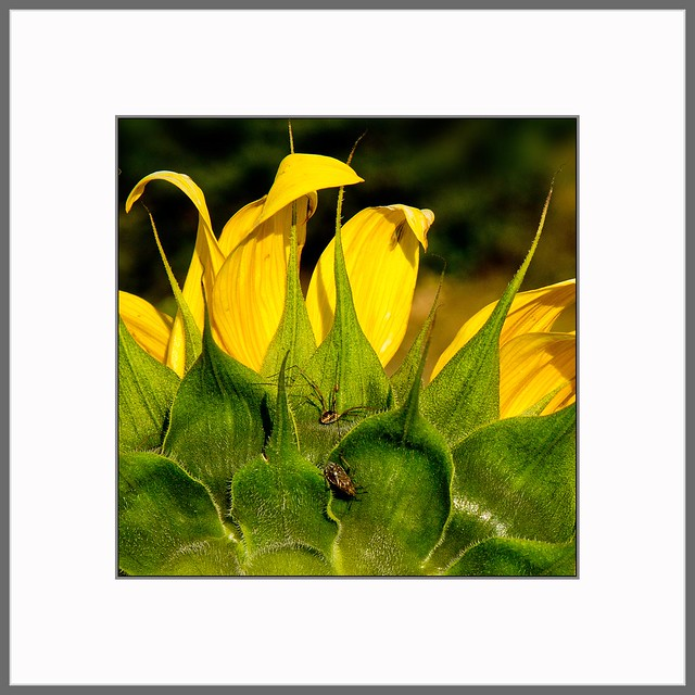 Freitag ist Blumentag (friday - flowerday)