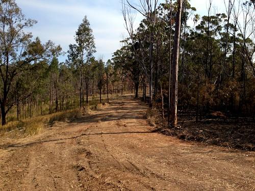 bushfire rfs controlline