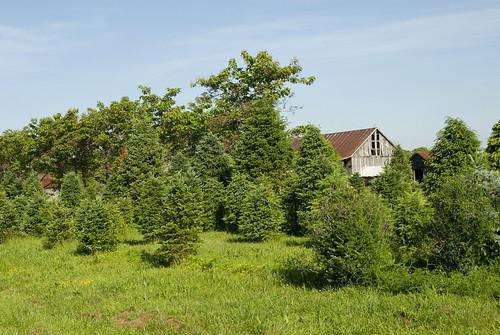 Bashford Tree Farm,  Bushwood
