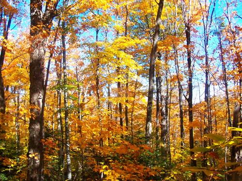 mountain lyon trail maples along andyarthur