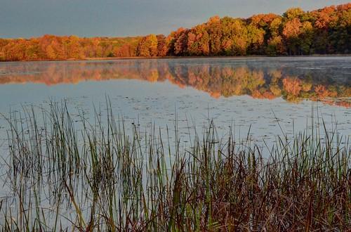 autumn fall colors leaves michigan