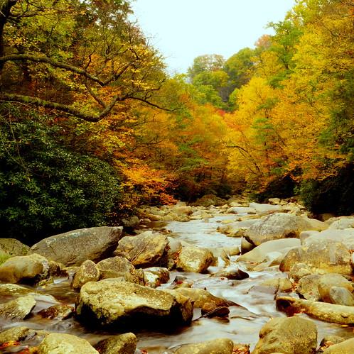 autumn color nature river countryside tennessee smokymountains naturesfinest westpronglittlepigeonriver blinkagain