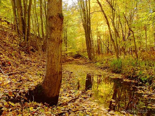 autumn trees brown reflection green fall nature water leaves yellow creek scenery change oakopenings northwestohio toledometroparks wabashcannonball fujis1500