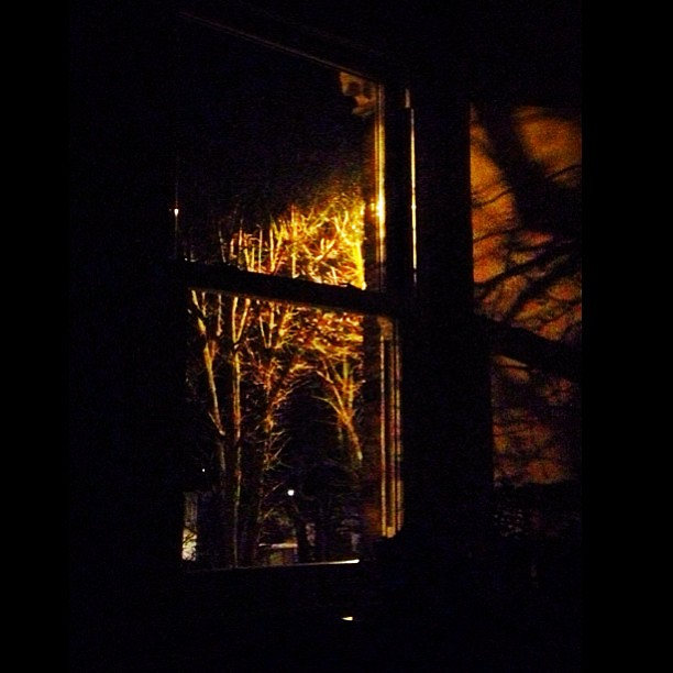 A #Room With A #View #dark #window #shadows #trees #branch… | Flickr