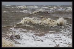 Dirty Rough Moreton Bay-1=