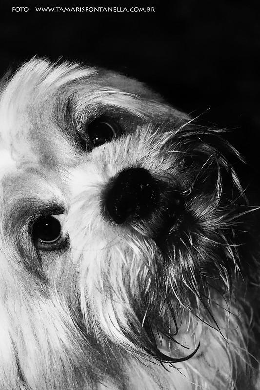 Pets: Bobby