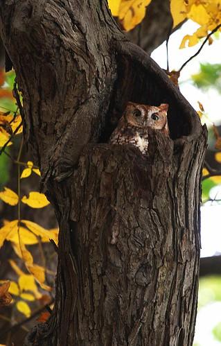 Fresh Pond Owl | by hbp_pix