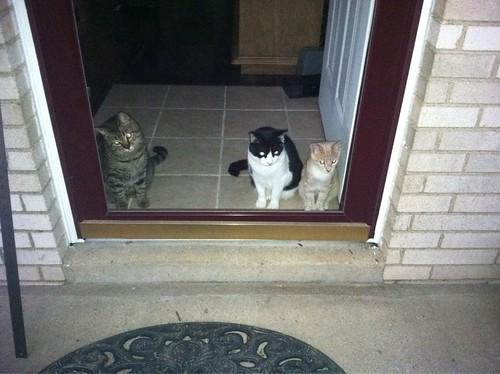 cats window cat orangecat kitten kitty porch kitties tuxedocat frontdoor sammi stripedcat happycats pinkcat pinkkitten mulitplecats skoochie