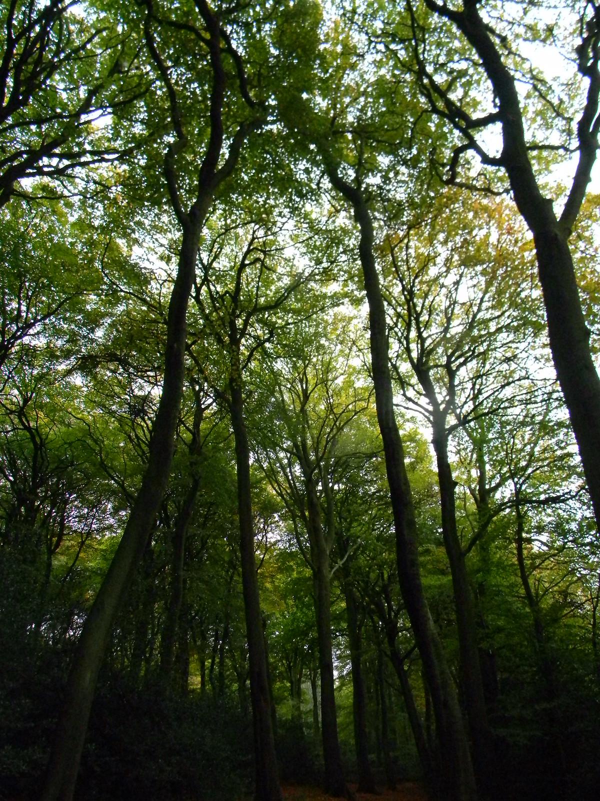 Monkton Wood Princes Risborough to Great Missenden