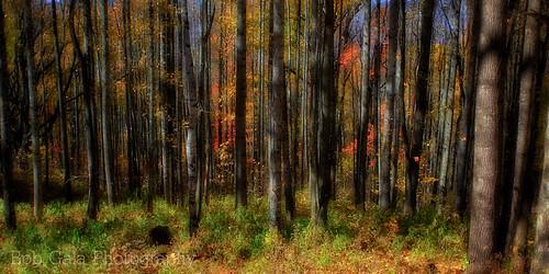 autumn trees northcarolina smokymountains