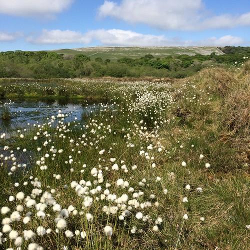 Malham-Arncliffe SSSI | by naturalengland