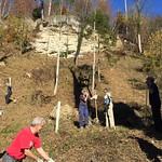 Arbeitseinsatz im Wald 2015