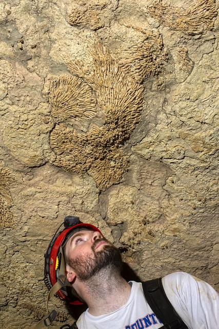 Syringopora fossil, Brad Anderson, Cumberland Caverns, Warren Co, TN