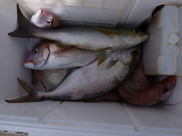 <p>a)釣果はハマチノ子、イサキ2尾、ショウサイふぐ1尾、花鯛6尾</p>