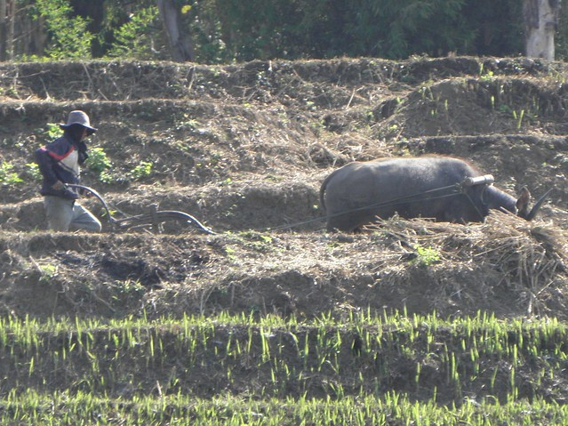 Farming in northern Laos