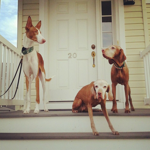 My dogs.