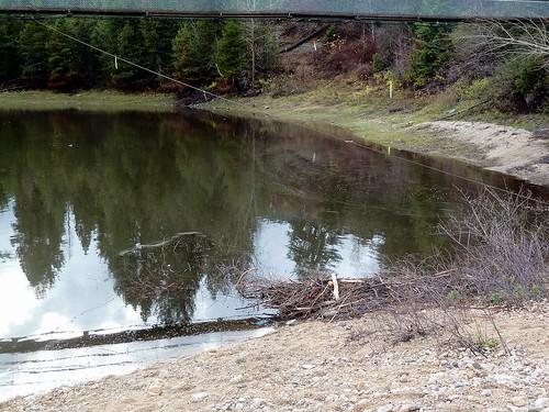 park trees canada bc beaver castlegar twinriverspark p1300113