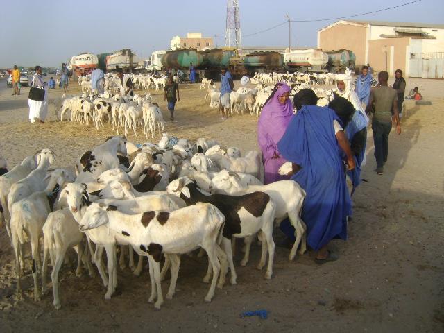 Maghreb celebrates Eid al-Adha | الاحتفالات بعيد الأضحى تع… | Flickr