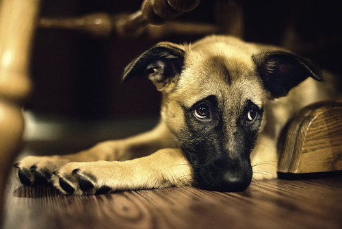 Those signature eyes... | by Ansel Edwards Photography