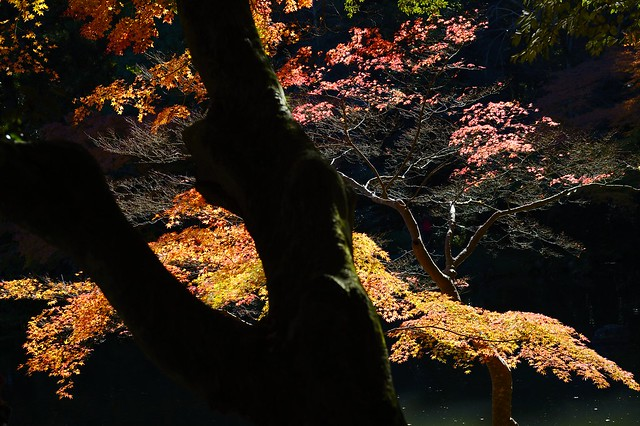 和色 -Japanese color of autumn